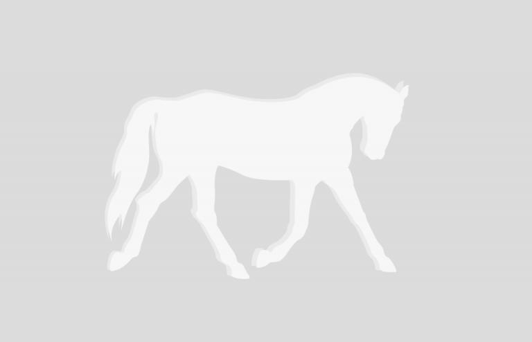 hevonen_clip